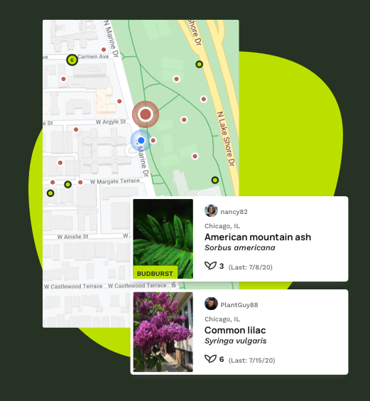 Find and observe plants in your area with our interactive map